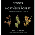 Sedges of the Northern Forest
